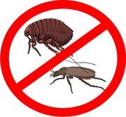 Дезинсекция (уничтожение вредоносных насекомых)